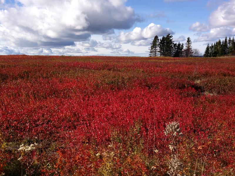 red-field